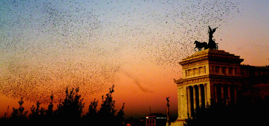 starling-rome-crop